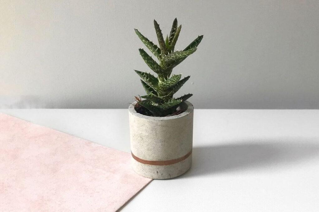 Các loại cây phong thủy phù hợp để trang trí bàn làm việc