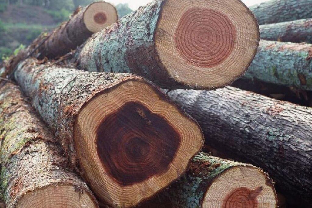 Gỗ gụ là một trong những chất liệu gỗ tốt nhất ở Việt Nam. (Ảnh sưu tầm)