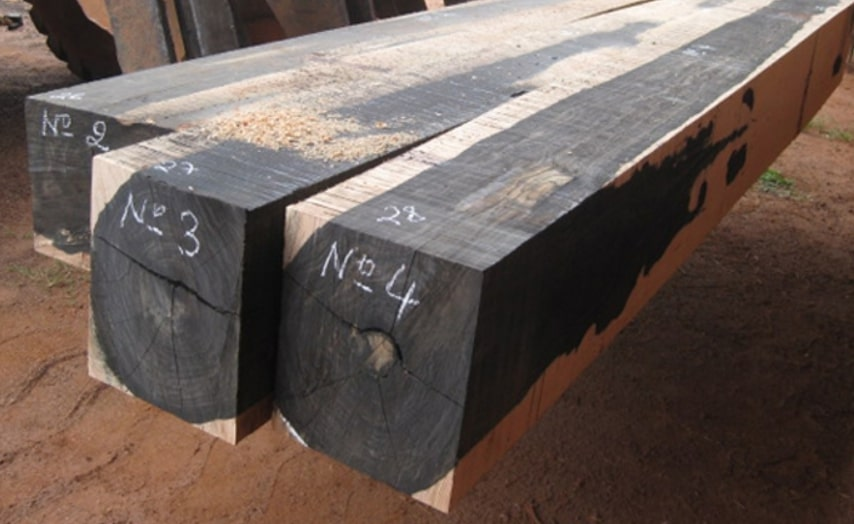 Hình ảnh sưu tầm về gỗ sồi đen.