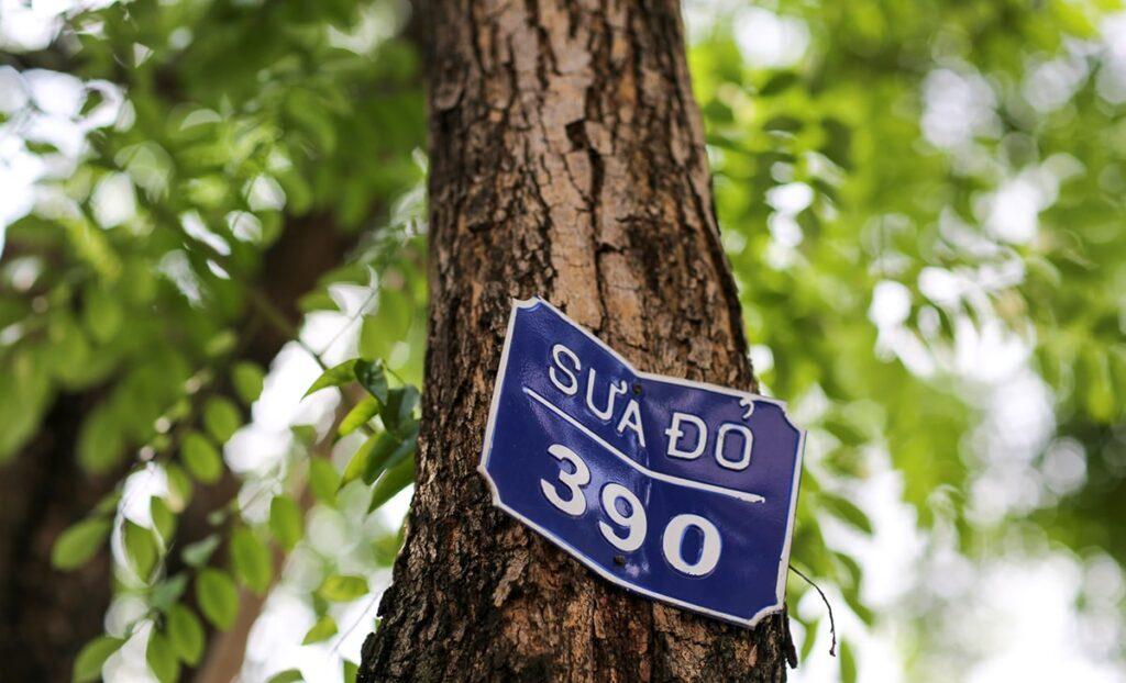 Cây sưa thuộc loại thực vật thân gỗ, nhóm họ đậu. (Ảnh sưu tầm)