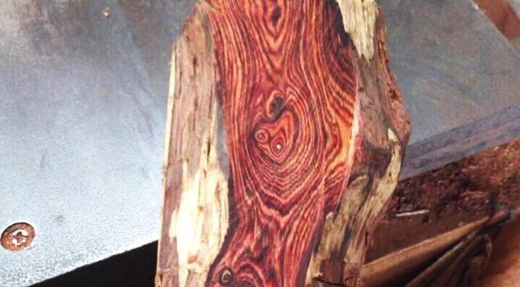 Vân gỗ sưa nổi lên, xoắn từng lớp từng lớp tạo thành những hình thù rất kỳ lạ. (Ảnh sưu tầm)